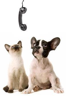 TELEMED DOG CAT.jpg