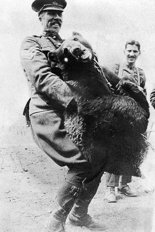 'Teddy' the bear mascot of the 59th Battalion B Company. C.E.F.