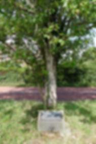 Memorials to Canadian Servicemen at Saltwood and East Sandling Camp, Saltwood