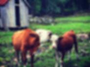 landbruksbilde.jpg