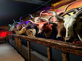 Discover how League City founders saved the Texas Longhorn from extinction.
