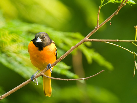 League City is Soaring with Popular Birding Classes and Events