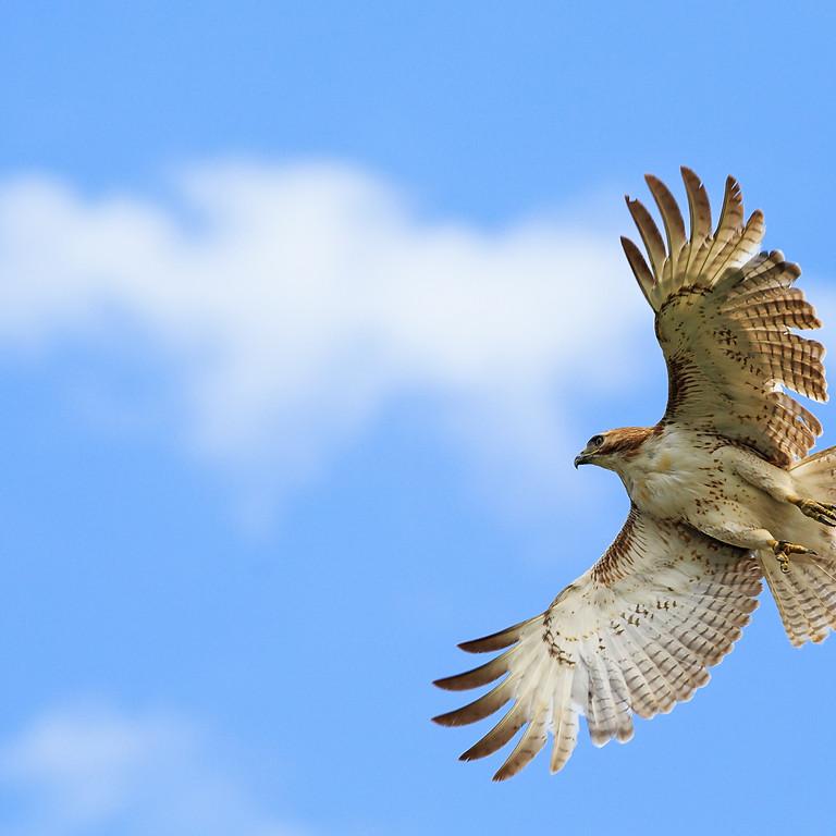 Fall Birding Frenzy