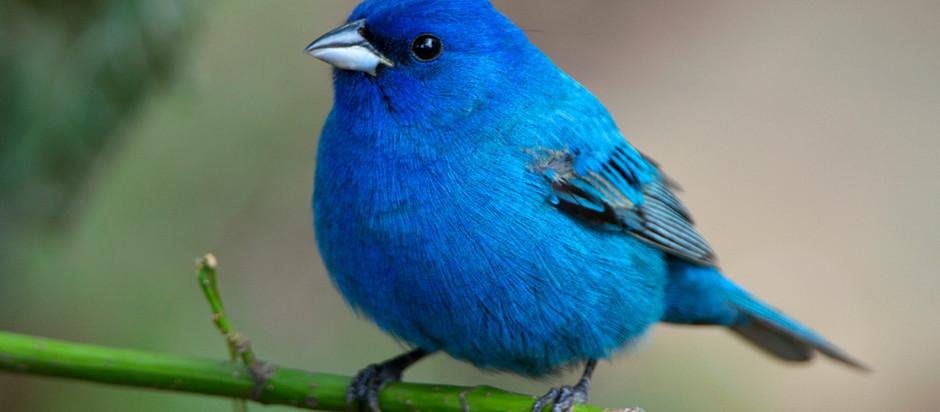 Colorful Birds Everywhere!