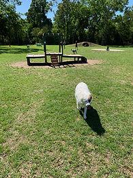 Bark Park at Countryside