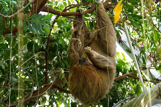 Moody Sloth.jpg