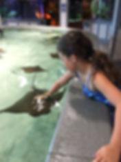 Kemah aquarium