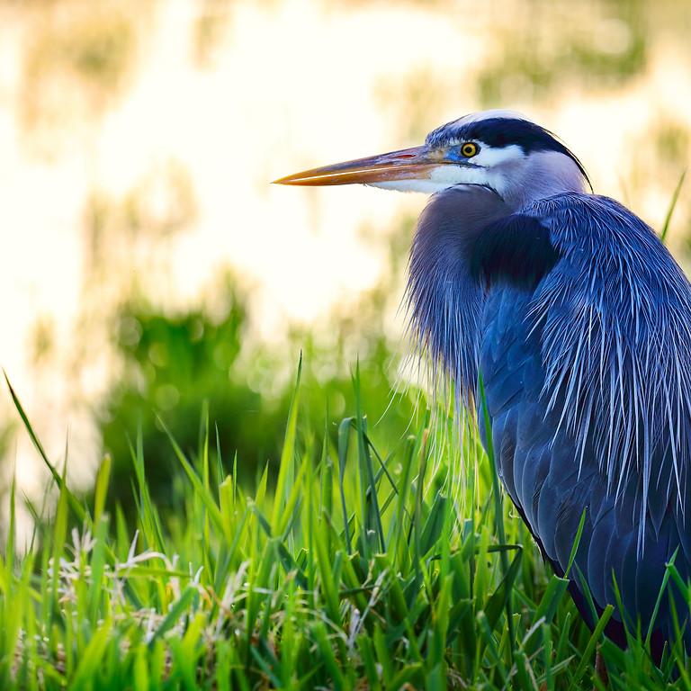 FREE Bay Area Birding Classes