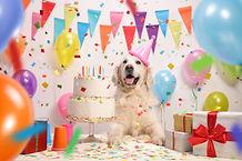 Dog and birthday cake.jpg