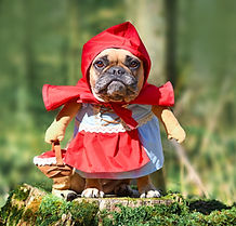 Dog in red riding hood costume.jpg