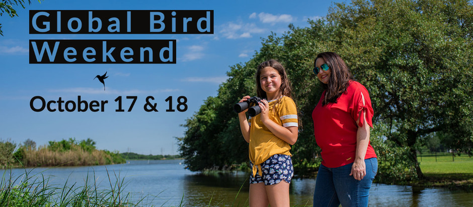 How to participate in Global Bird Weekend in League City, Texas