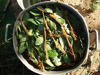 chacruna Leaf.png
