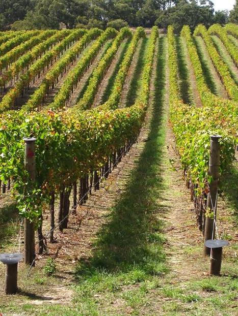 Explore the Hunter Valley vinyards