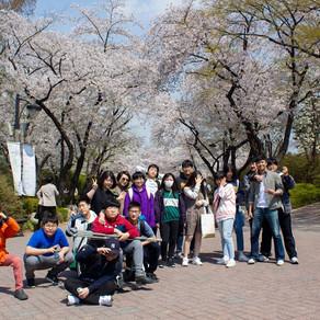 190412 어린이대공원 벚꽃놀이