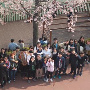 160408 석촌호수 벚꽃축제