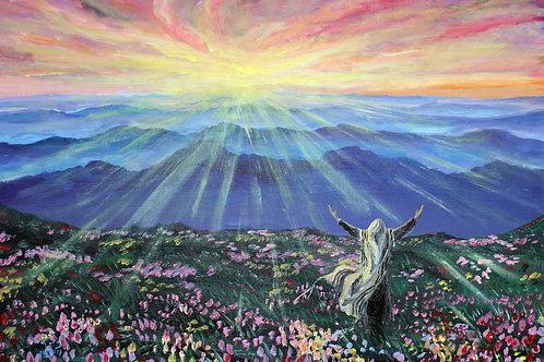 Mountain Meadow Glory