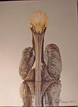 georgelemieux_pelicanDSC04362.JPG