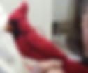 flet cardinal.png