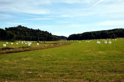 Natur aufräumen   Schweden