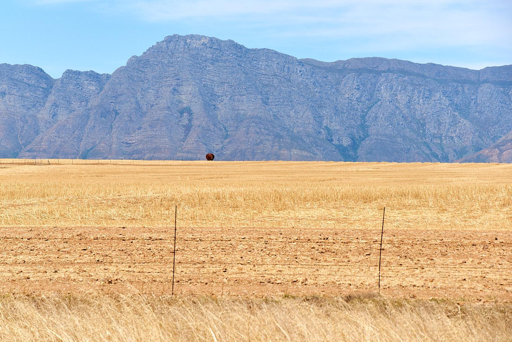 Fass mit Boden | Südafrika