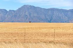 Fass mit Boden   Südafrika