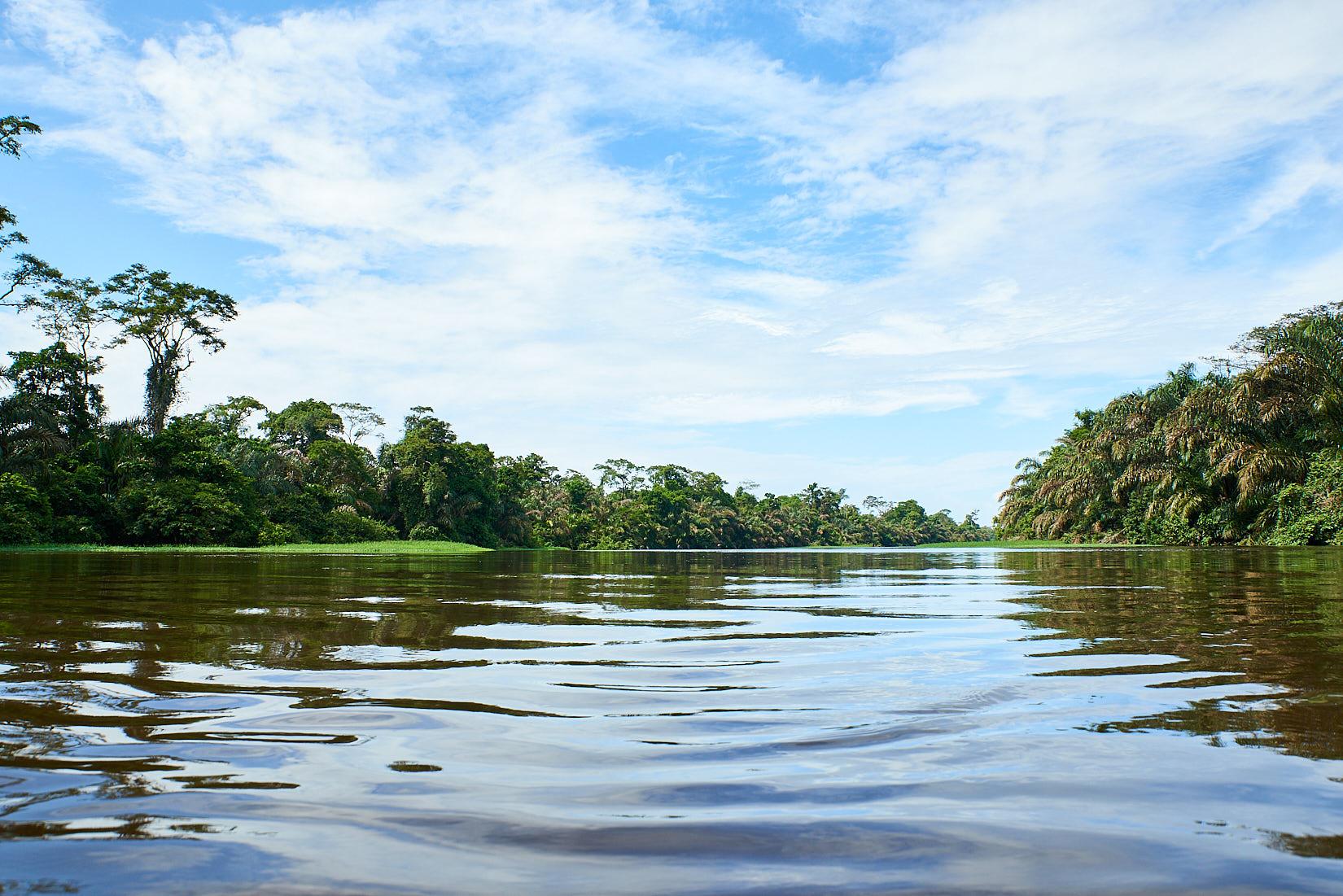 Dschungel | Costa Rica