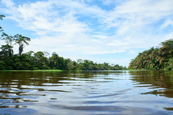 Dschungel   Costa Rica