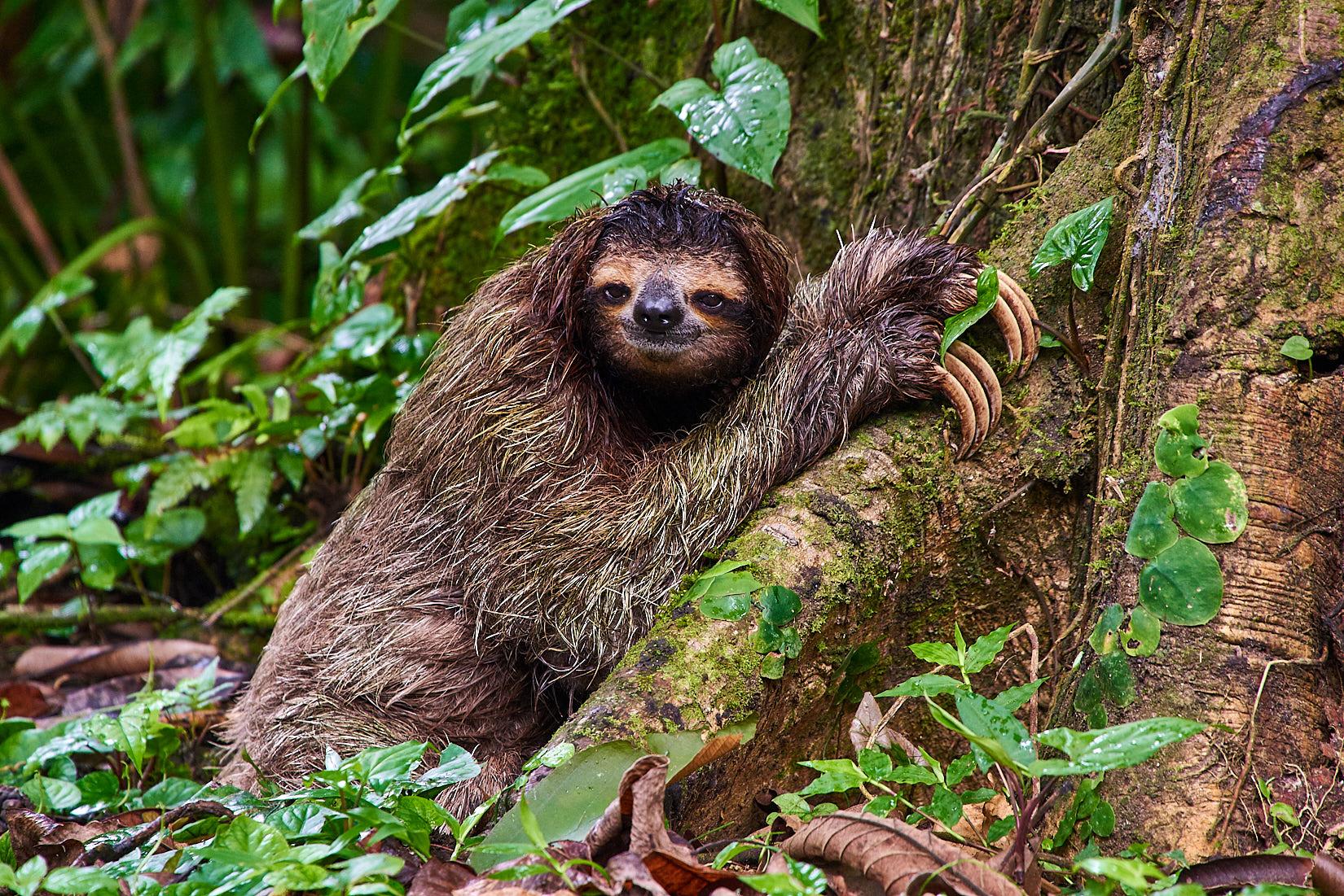Immer schön langsam | Costa Rica