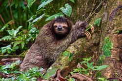 Immer schön langsam   Costa Rica