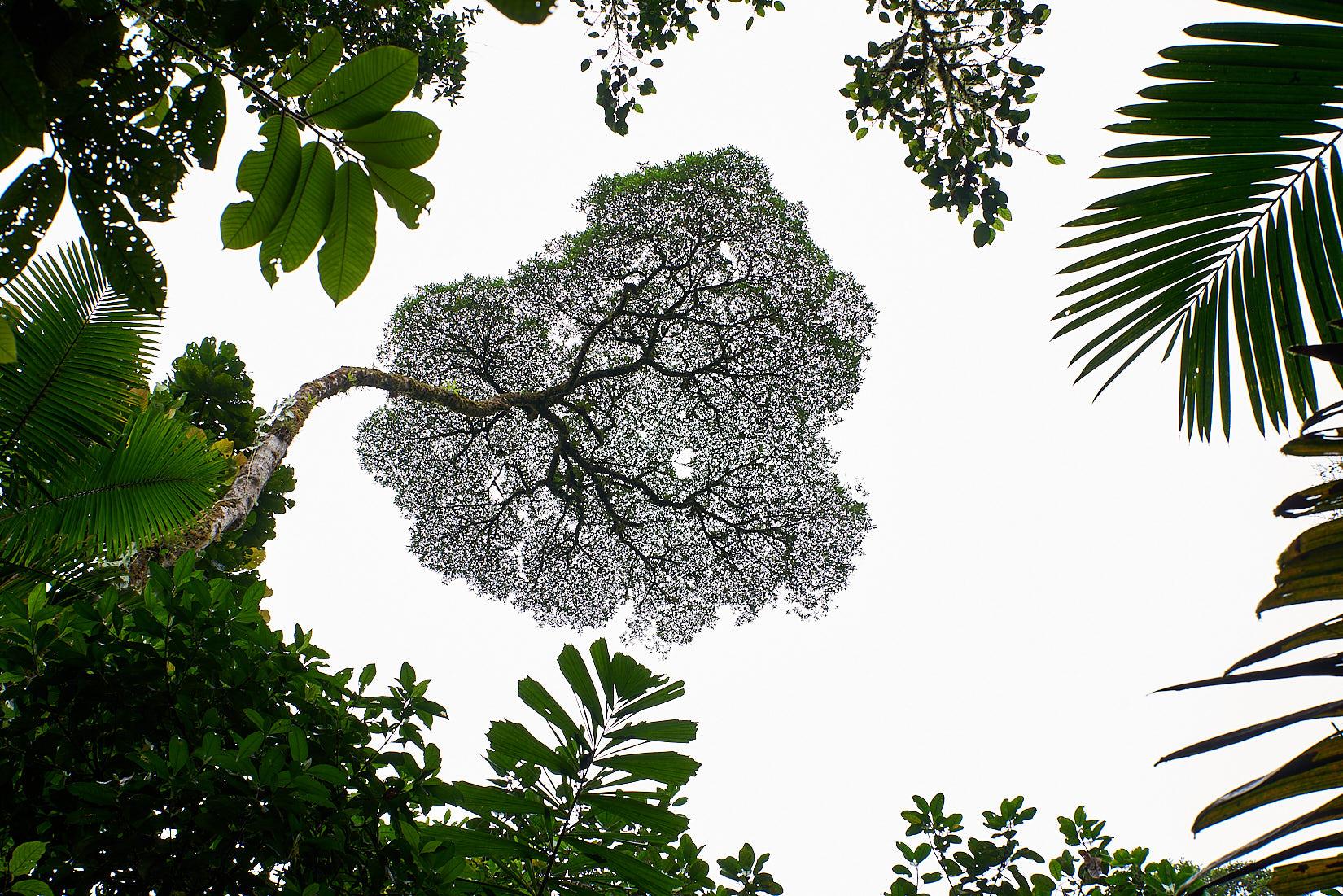 Der Wipfel | Costa Rica
