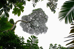 Der Wipfel   Costa Rica