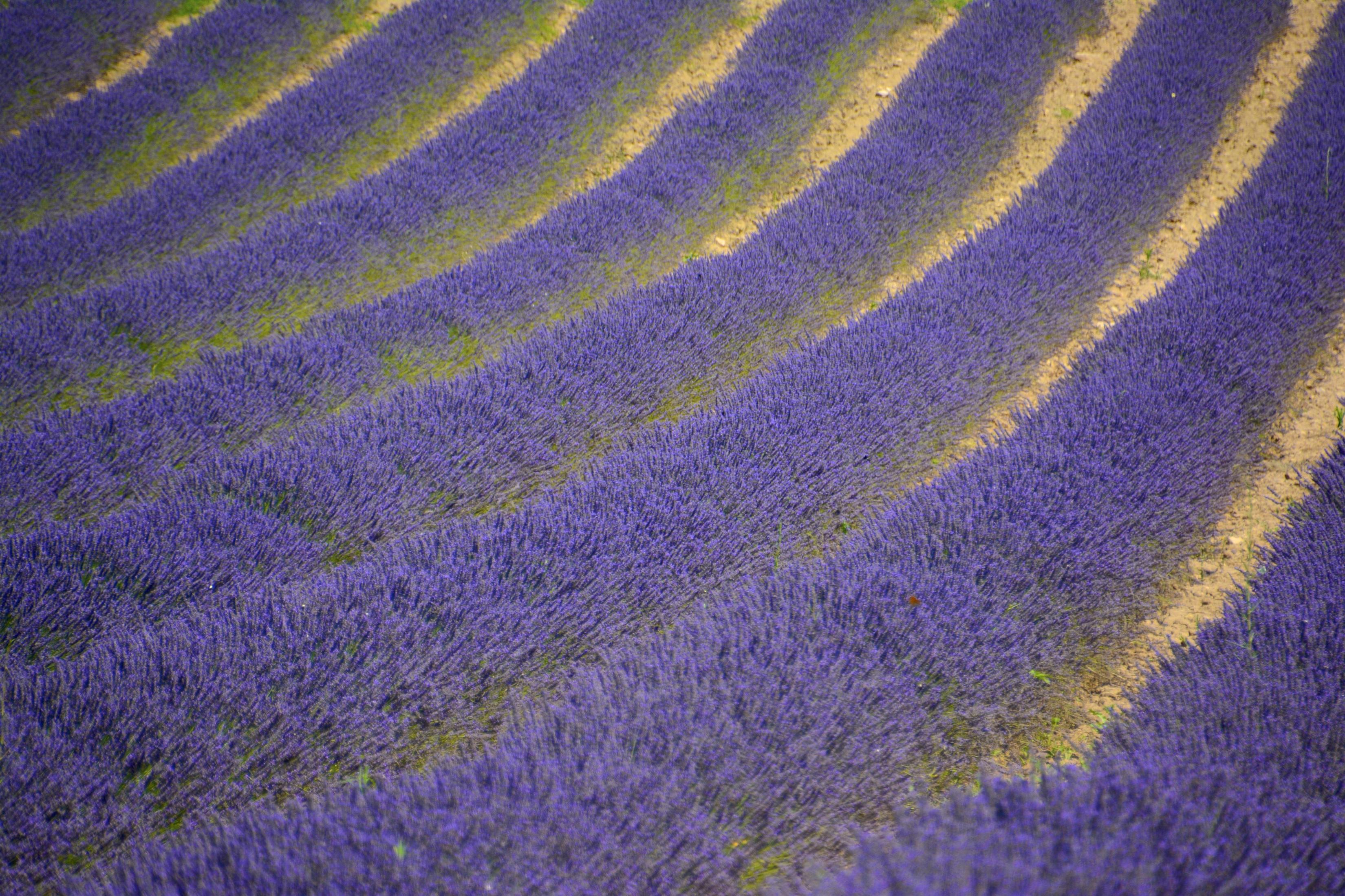 Schmetterling | Provence