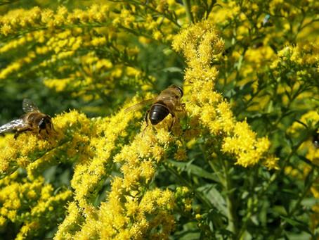 5 Vlinder aantrekkende planten voor een tuin-groentje