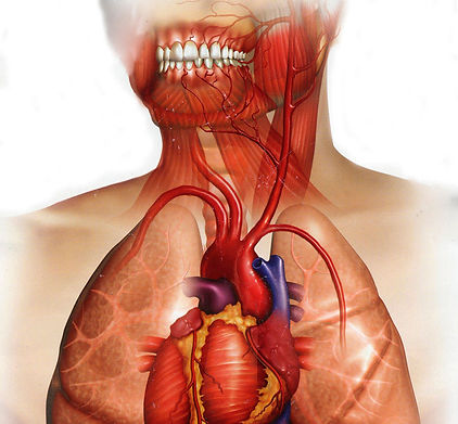 Diş eti hastalığı ve kalp krizi