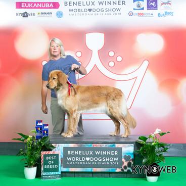 R_1848_FREE_BENELUX_WINNER_WDS_2018_KYNO