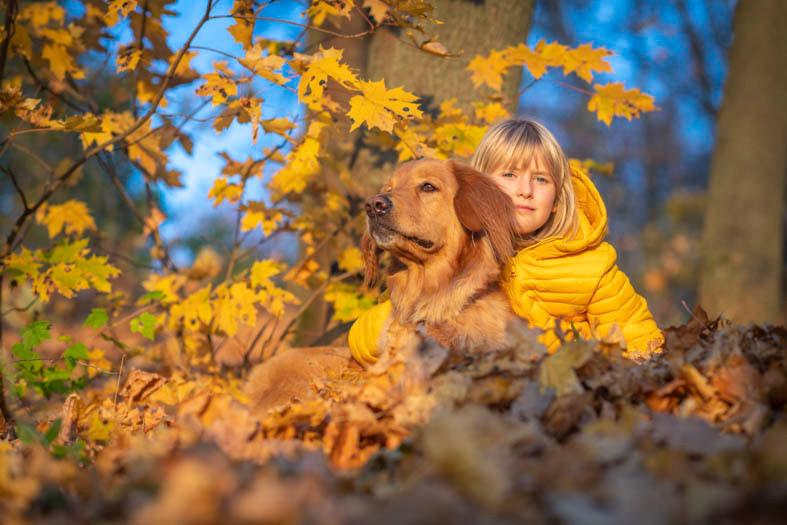hovawart, hofmachertaiga, hovawart_puppy