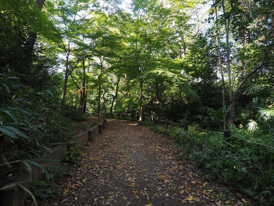 20181103 有栖川公園_2.jpg