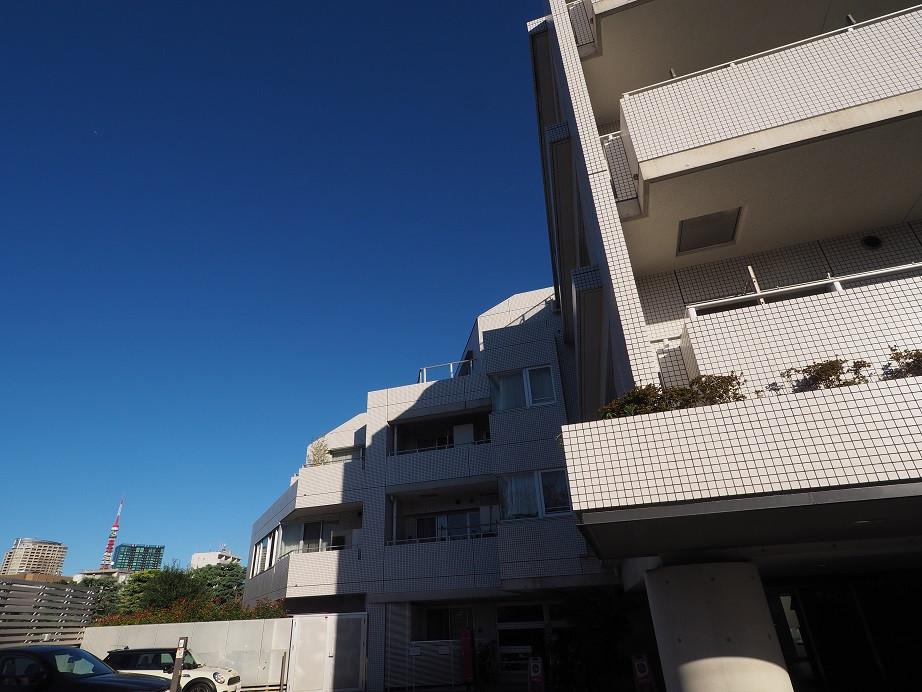20181101 コスモリード_2.jpg