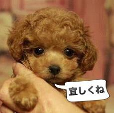 Hi,We are Nishiazabu Living Inc.