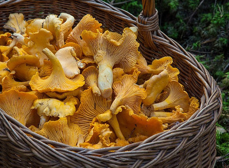 A fruitful autumn activity: Mushroom-picking in forests