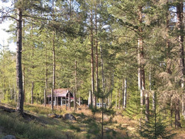 How to survive the Finnish cottage