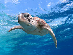 Hello there, whats up, sea turtle close