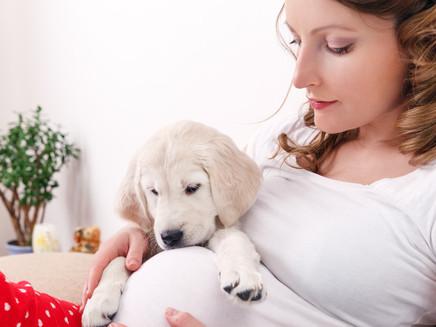 Gravidez e pets: como se preparar com seu animalzinho?