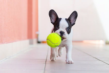 frenchy with ball.jpg