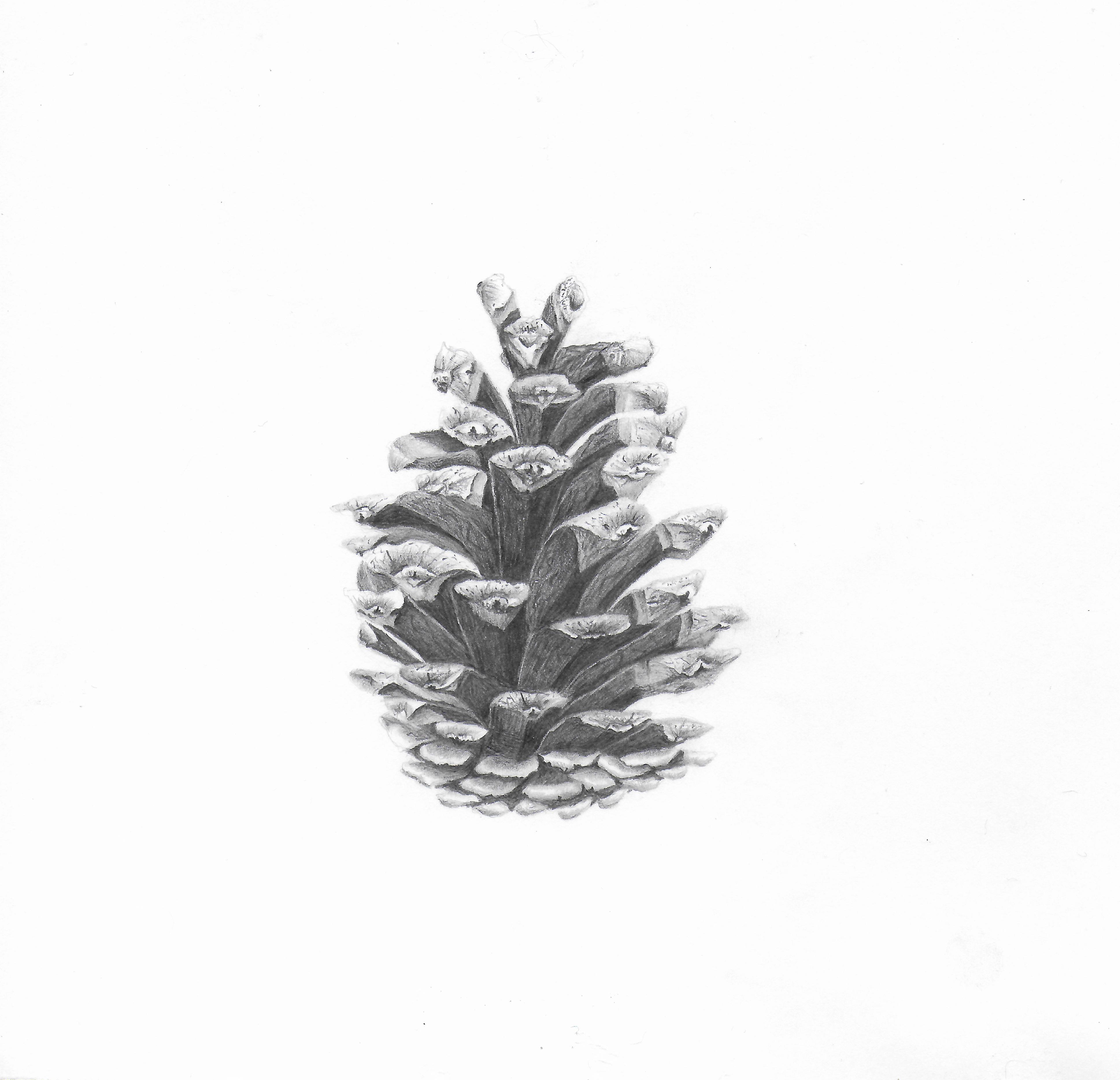 Pinecone - Graphite