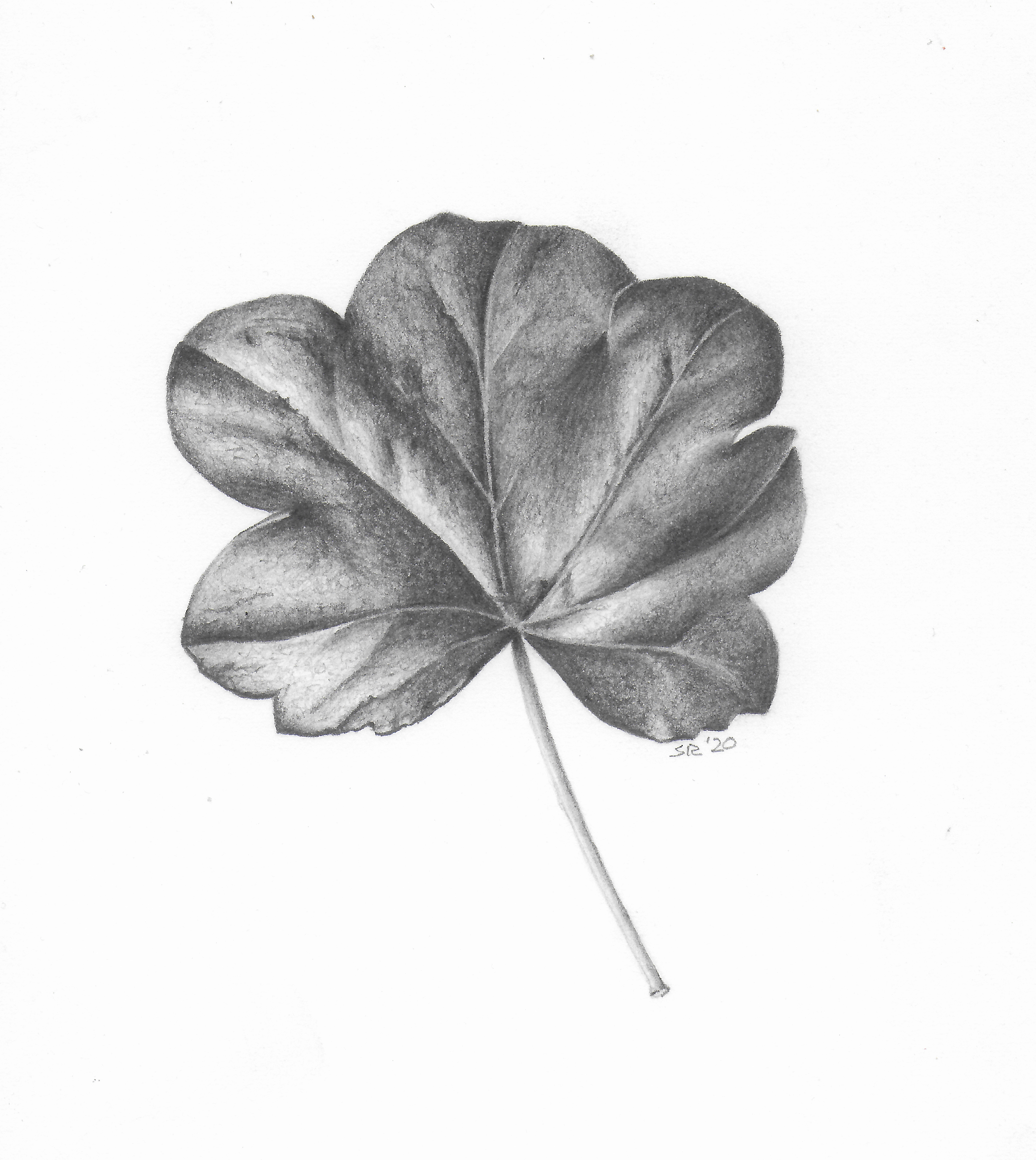 Leaf - Graphite