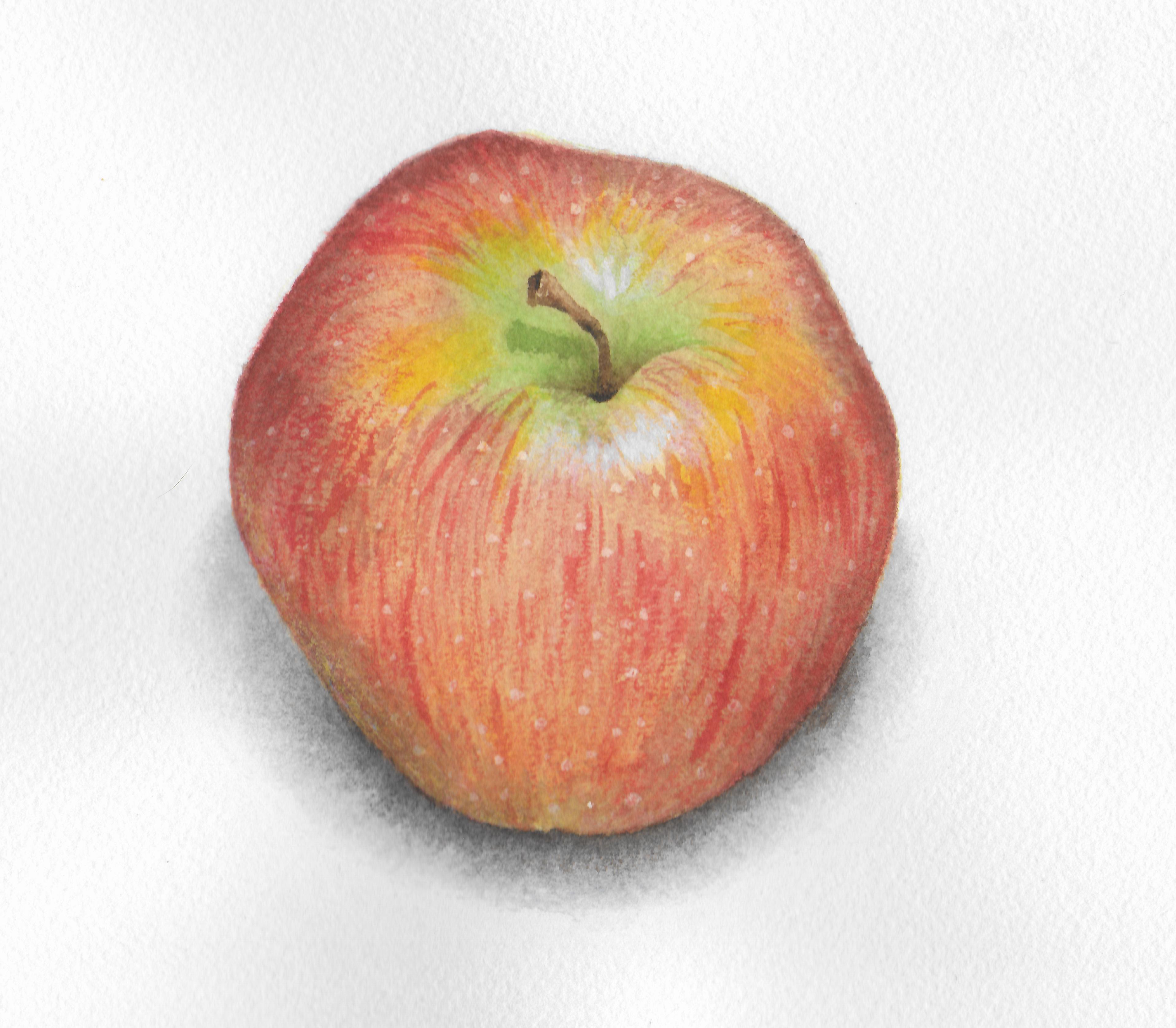 Apple - Watercolor