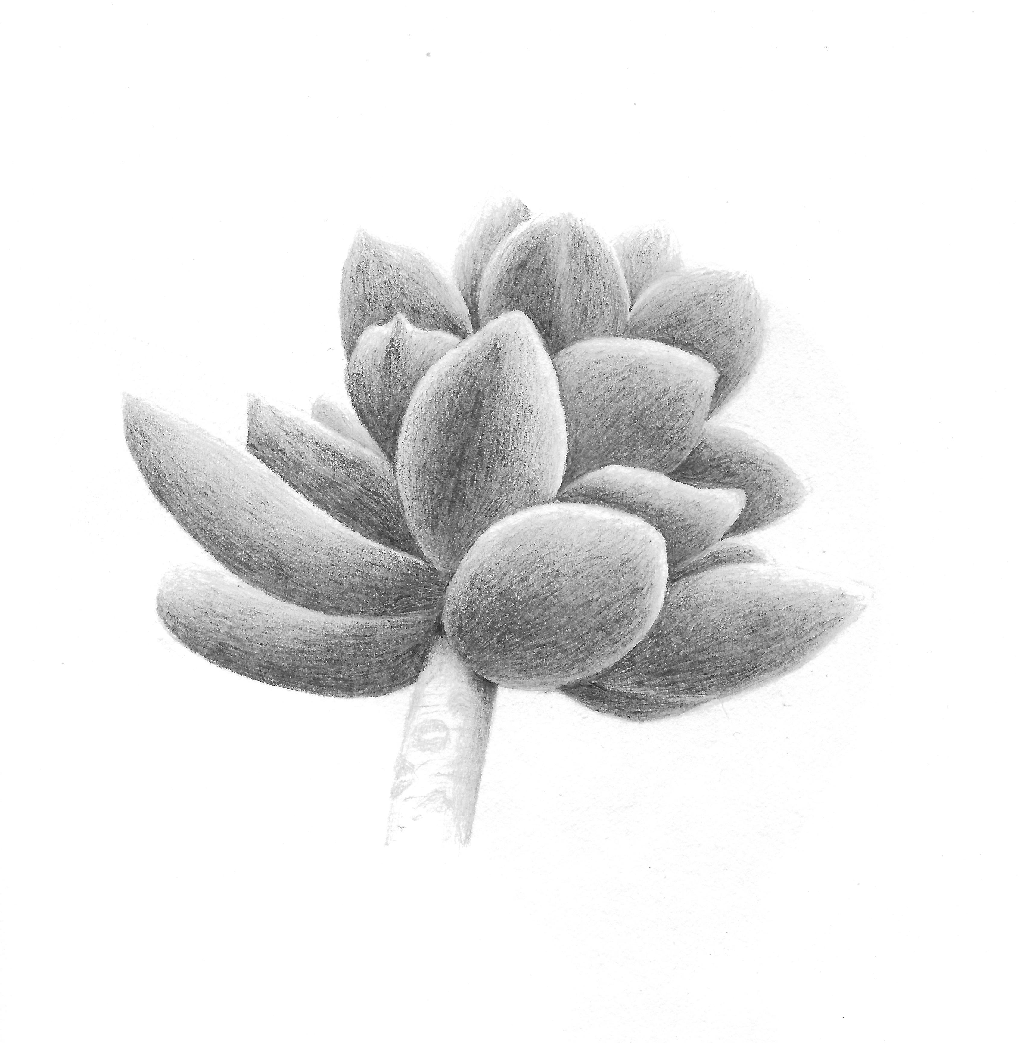 Succulent - Graphite