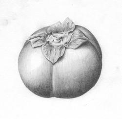 Persimmon - Graphite