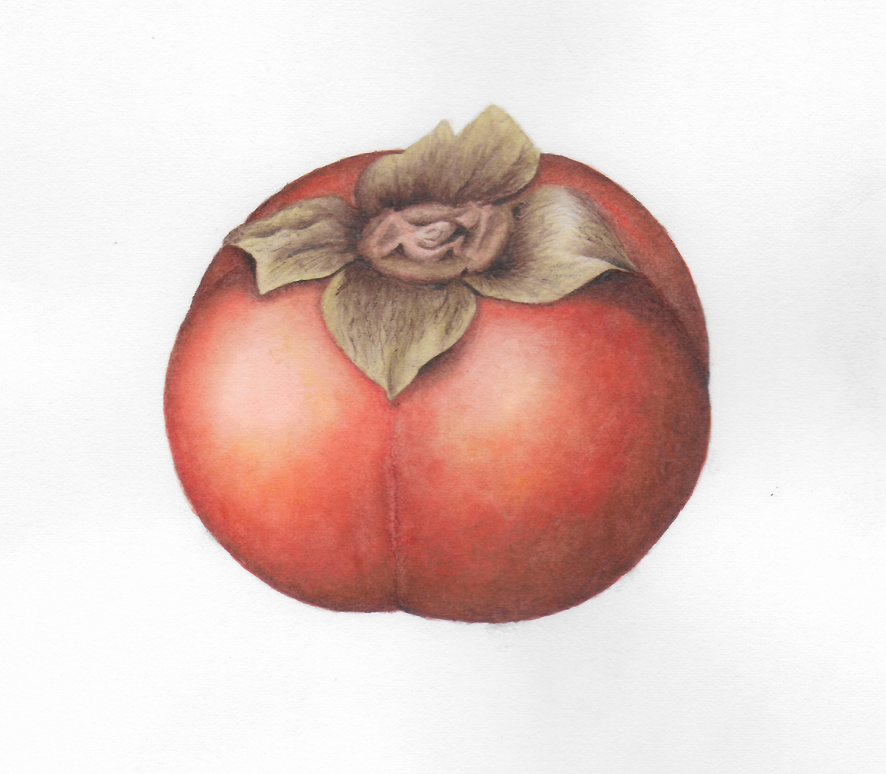 Persimmon - Watercolor